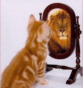 cat-to-lion-image